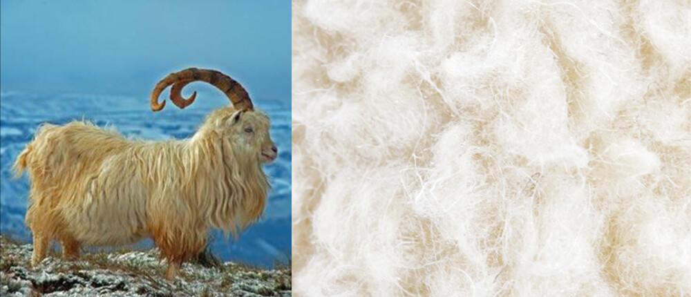 TRECA Paris國際頂級床墊材質 克什米爾山羊絨