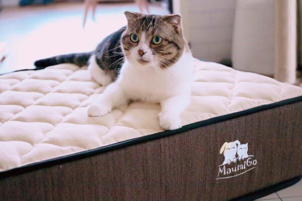 台灣床墊品牌 單人床墊 德泰彈簧床&My Side床墊